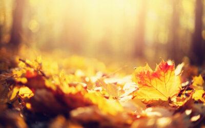 Wpaździerniku zbieramy napotrzebujacych